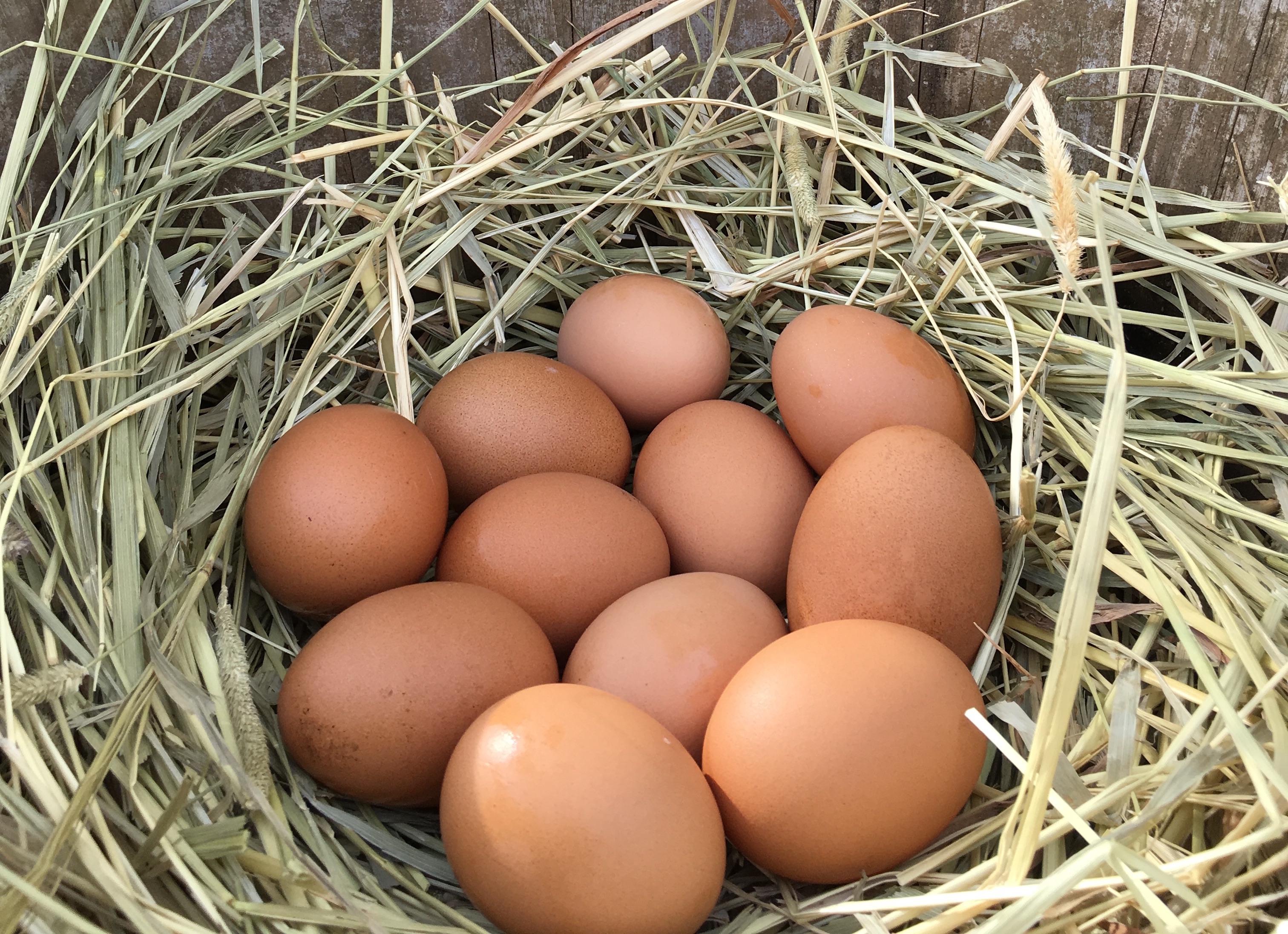 産みたての卵、自家製野菜やハーブも栽培